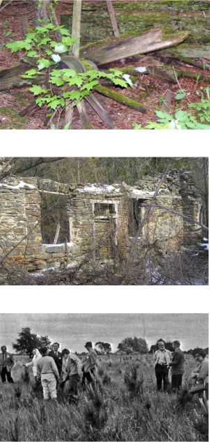 Image of forest floor, old homestead and early reforestation effors