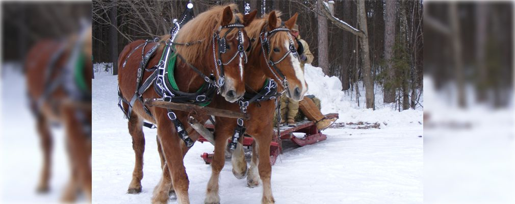 Image of visitors on horse drawn sleigh Limerick Open House