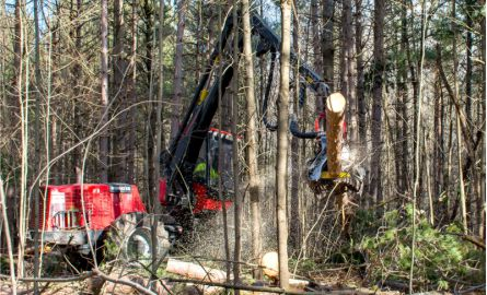 Thinning operations in forest