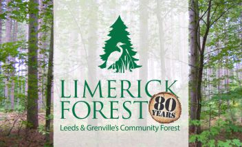 Limerick Forest logo with forest background
